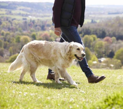 man walking with dog in park